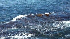 Południowy ocean na skałach & gałęzatce