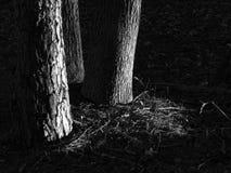 połysk słońca drzewa Obraz Stock