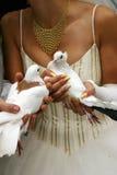 poślubić gołębie Obraz Stock