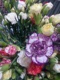 Poślubnik, kwiaty, Morocco goździka weigt fotografia royalty free