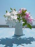 Poślubnik na drewnianym stole, tło niebieskie niebo Zdjęcia Royalty Free