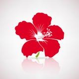 Poślubnika czerwony kwiat Obraz Stock