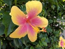 Poślubnika kwiat chuje gekon głowę Fotografia Stock