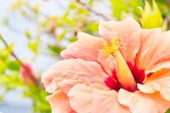 Poślubnika kwiat przeciw abstrakta zamazanemu tłu Obrazy Royalty Free