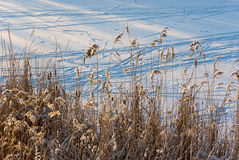 pośpiechu zakrywający śnieg Obraz Stock
