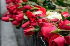 Poświęcenie. czerwieni róża Zdjęcia Royalty Free