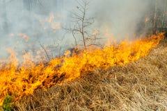 pożar obrazy stock