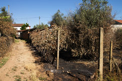 Pożar lasu burnt ziemię obok małej wioski - Pedrogao Grande Zdjęcie Stock