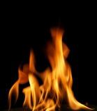 pożar lasu campingowy płomień Zdjęcia Royalty Free