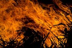 pożar lasu campingowy płomień zdjęcie stock