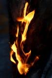 pożar lasu campingowy płomień Fotografia Stock