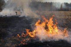 Pożar lasu, płonąca trawa i mali drzewa, zdjęcia stock