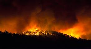 Pożar lasu przy nocą