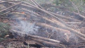 Pożarnicza burza w lasowym piekle na ziemi; straszny ogień niszczy tysiące akry drzewa HD zbiory wideo
