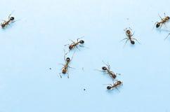 pożarnicza mrówki czerwień Zdjęcie Royalty Free