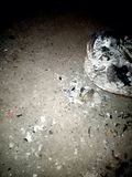 Pożarnicza oparzenie wasteage tekstury tła tapeta Żywa wektorowa ilustracja ilustracja wektor