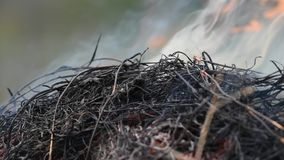Pożarnicza płonąca sucha trawa ja niebezpieczeństwo dla środowiska zbiory wideo