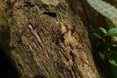 Pożarnicze mrówki i zdobycz zdjęcie stock