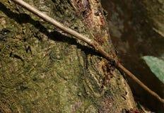 Pożarnicze mrówki i zdobycz obraz stock