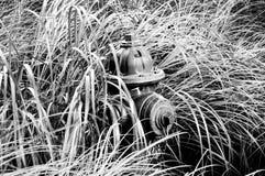 Pożarniczy hydrant w trawie czarny white zdjęcie royalty free
