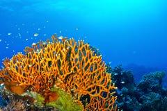 Pożarniczy koral zdjęcie stock