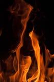 Pożarniczy pomarańczowy beaty pomarańczowy kolor Obrazy Royalty Free