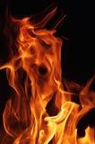 Pożarniczy pomarańczowy beaty pomarańczowy kolor Fotografia Stock