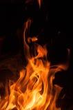 Pożarniczy pomarańczowy beaty pomarańczowy kolor Fotografia Royalty Free