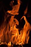 Pożarniczy pomarańczowy beaty pomarańczowy kolor Obraz Royalty Free