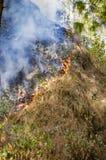 Pożaru i dymu płonąca trawa Fotografia Royalty Free