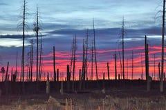 Pożaru Lasu żniwo zdjęcie royalty free