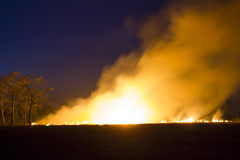 Pożaru Płonący lasowy ekosystem niszczą fotografia stock