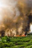 Pożary lasu w mieście na gorącym oversupply Strażak pomagać pośpieszać zapobiegać ogienia rozprzestrzeniającego wioska obrazy stock