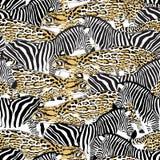 Połów zebry i kota bezszwowy wzór Fotografia Stock