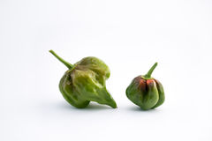 Połówka dojrzewa zielony chili Zdjęcie Royalty Free