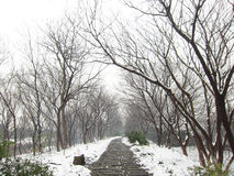 Po śniegu Fotografia Stock