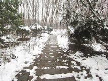 Po śniegu Fotografia Royalty Free