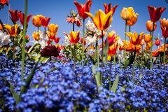 Po środku Colourful pola fotografia stock