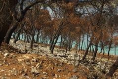 Pożar lasu 03 Obrazy Royalty Free