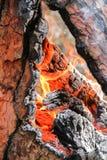 Pożar Lasu Fotografia Royalty Free