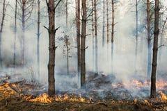 Pożar lasu i chmury dymu Zdjęcia Stock