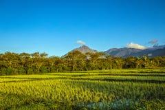 Pożarnicza góra - Burni Telong Fotografia Stock