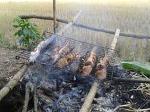 Pożarnicza ryba Zdjęcie Stock