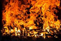 pożarniczy drzewo obraz royalty free