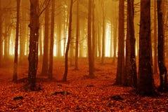 pożarniczy las Zdjęcie Stock