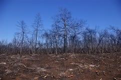 pożarniczy las Zdjęcia Stock