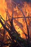 pożarniczy las Obraz Royalty Free