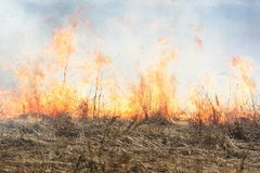 pożarniczy las Fotografia Stock