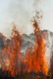 pożarniczy trawiasty teren Zdjęcia Stock
