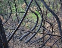 Pożaru lasu zniszczenie Obrazy Royalty Free